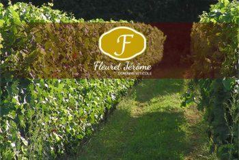 Domaine viticole à Champagnolles
